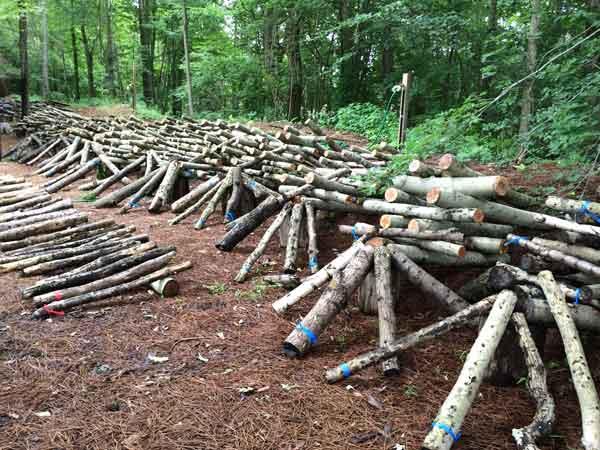 logs600