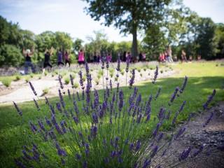 lavender_featured
