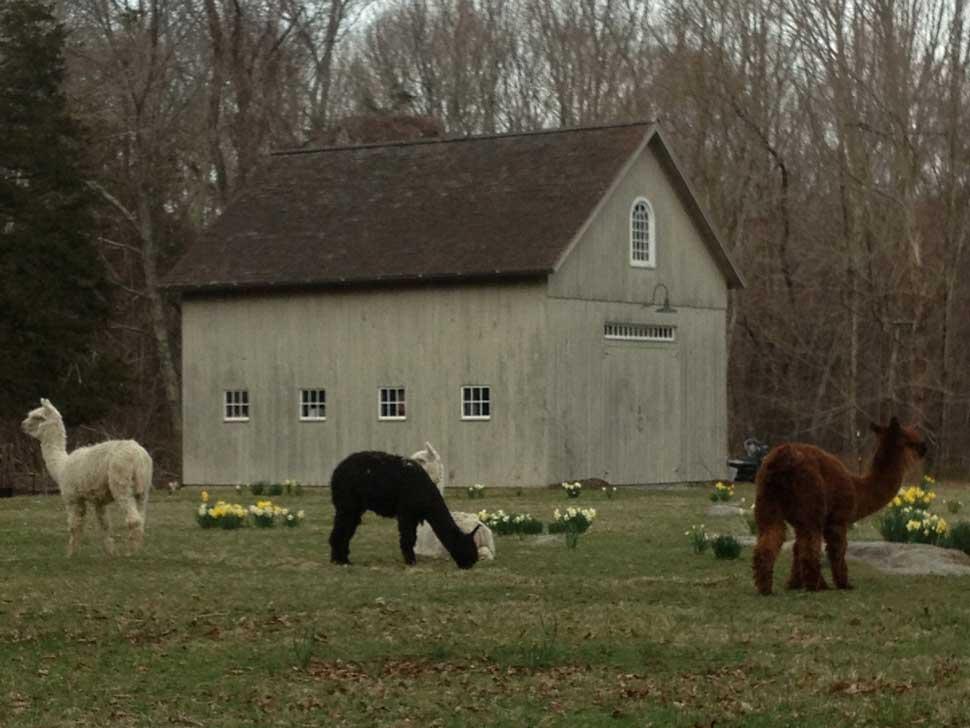 Flat Rock Farm, Lyme
