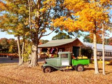 Feast on Fall Flavors at Staehly's