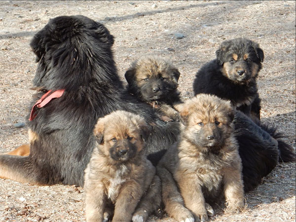 Bankhar Dogs