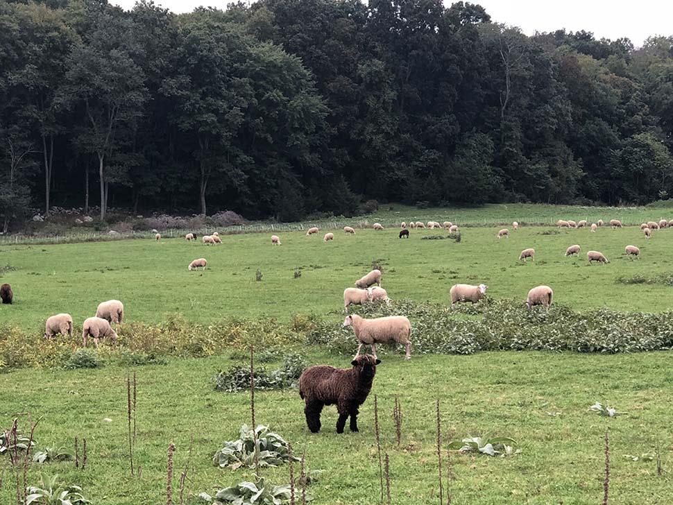 Sankow's Beaver Brook Farm